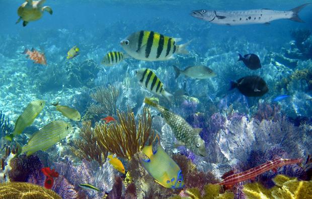 Dykning i Bahamas