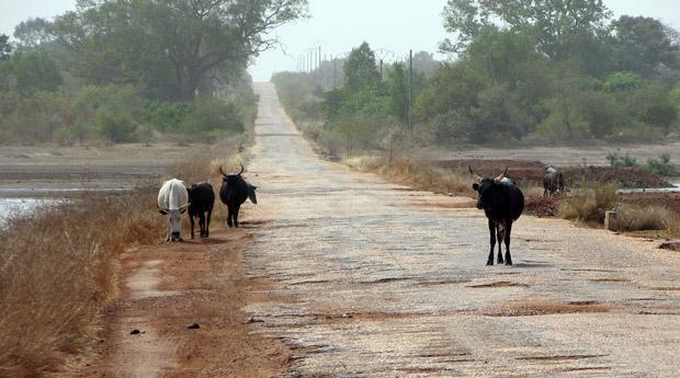 Dårlig vej - Gambia